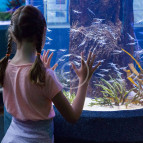Aquarium Lighting Information